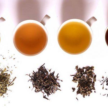 Características y propiedades del té