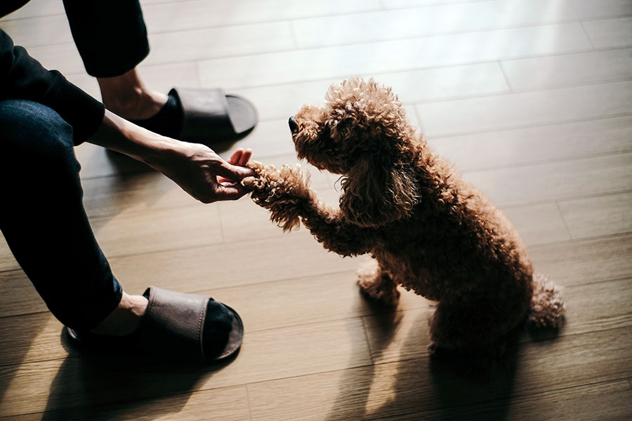 Los perros pueden detectar la tristeza de sus dueños