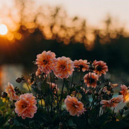 Felicidad es saber apreciar las cosas simples