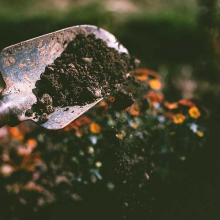 ¿Sabías que la jardinería beneficia nuestra salud emocional?