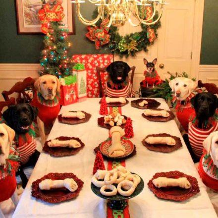 ¿Quieres compartir la cena de Navidad con tu perro? Evita darle estos alimentos