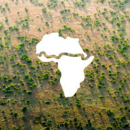 África pone el ejemplo y planta 8 mil kilómetros de árboles para construir la 'Gran Muralla Verde'