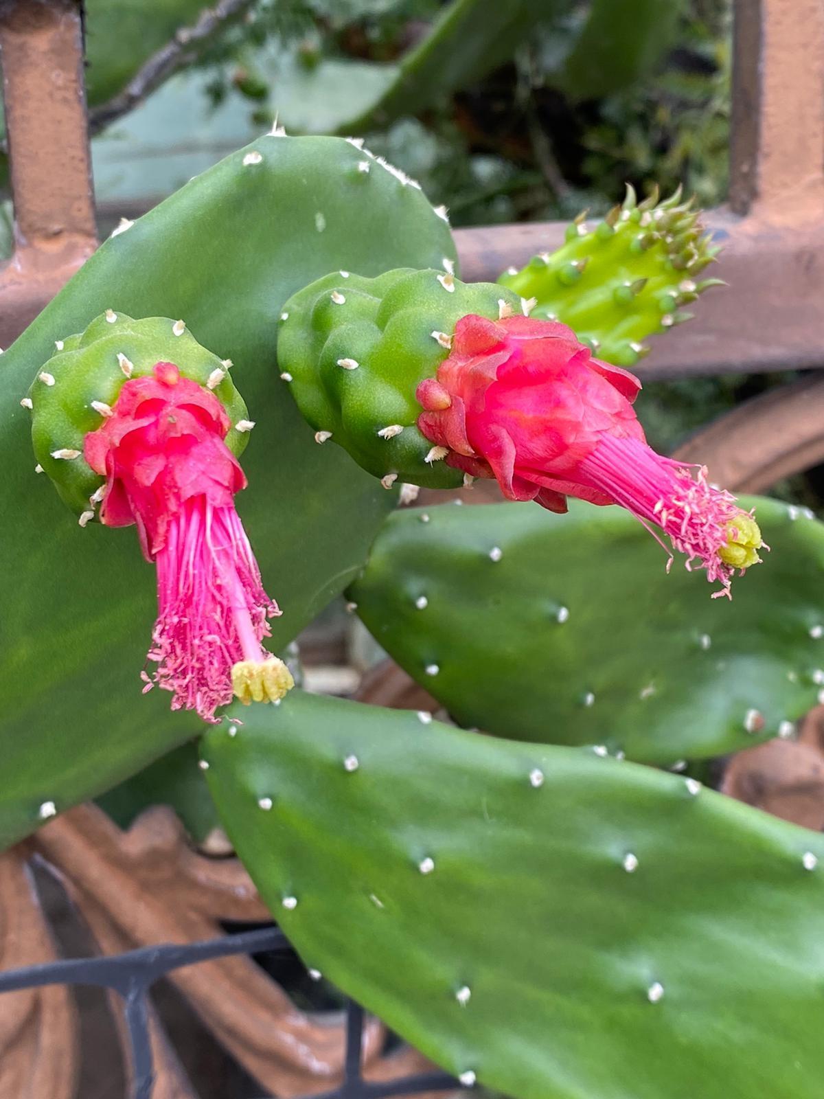 cactus sonora Luis Fernando Heras Portillo