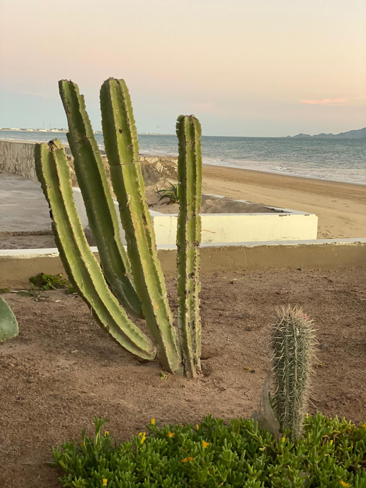 cactus bahía de kino Luis Fernando Heras Portillo