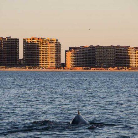 El canto de las ballenas puede indicar a dónde han viajado, señala estudio