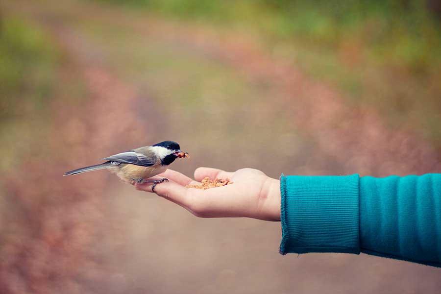 La inteligencia de las personas también está en la bondad