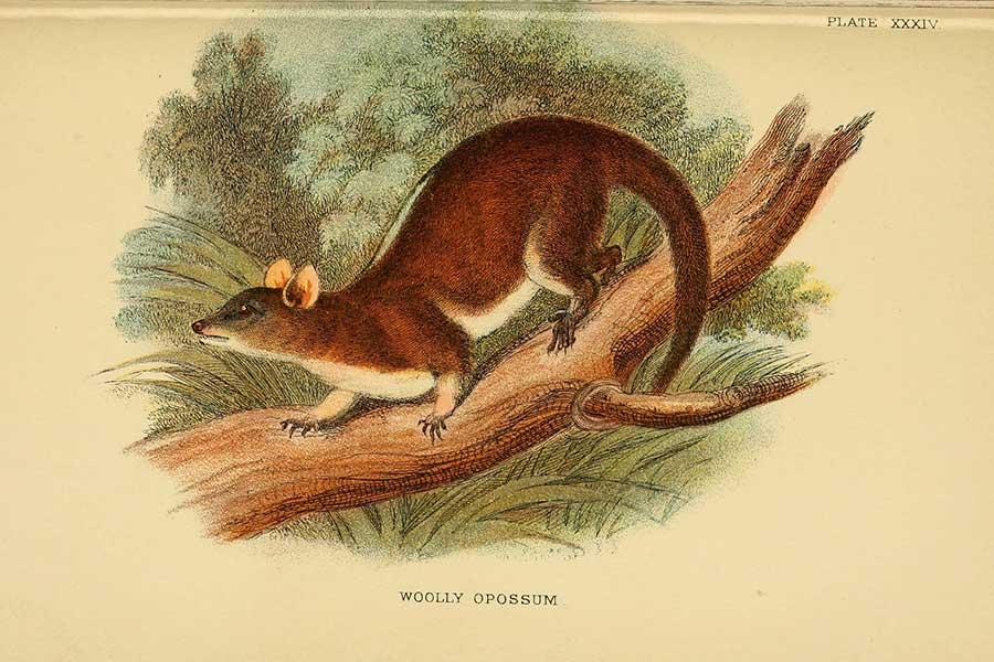 Ahora puedes descargar gratis más de 150 mil ilustraciones la Biblioteca del Patrimonio de la Biodiversidad