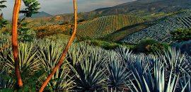¿Por qué el tequila solo se puede producir en México?