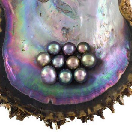 Perlas del Mar de Cortez, además de únicas, son cultivadas de manera respetuosa con el medio ambiente