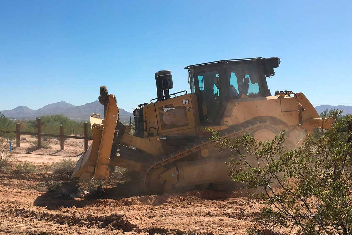 Sahuaros están siendo removidos del desierto para abrir paso al muro fronterizo entre México y Estados Unidos
