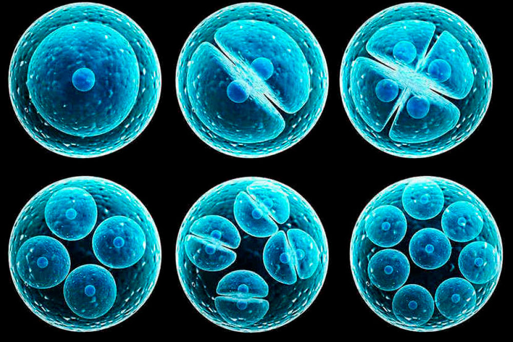Una mentalidad positiva ayuda a regenerar tus células