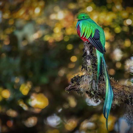 Quetzal, ave mística de México