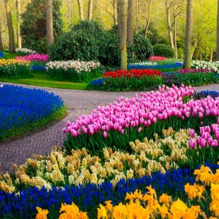 Así es como se ven 7 millones de tulipanes en el jardín más grande de Holanda