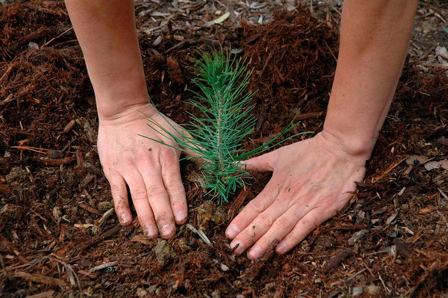 Plantar un árbol por cada recién nacido: Así es la iniciativa de reforestación de Bruselas