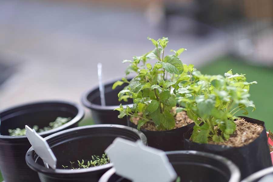 4 insecticidas naturales para tu jardín