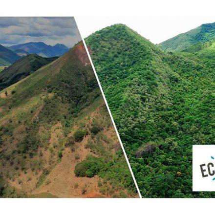 Ecosia, el motor de búsqueda ecológico, ha logrado plantar 100 millones de árboles