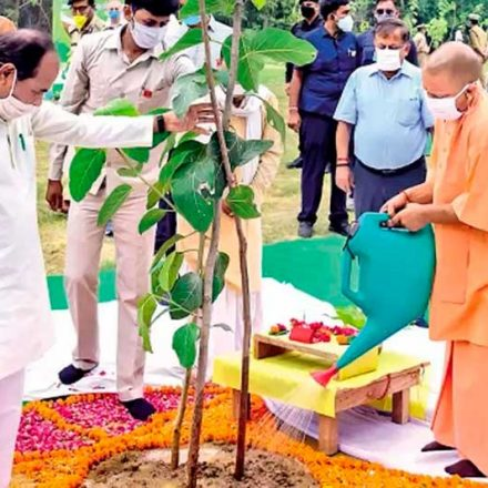 En India, 2 millones de personas se unen para plantar 20 millones de árboles