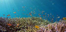 Estudio revela que microplásticos se están acumulando en fondo del océano