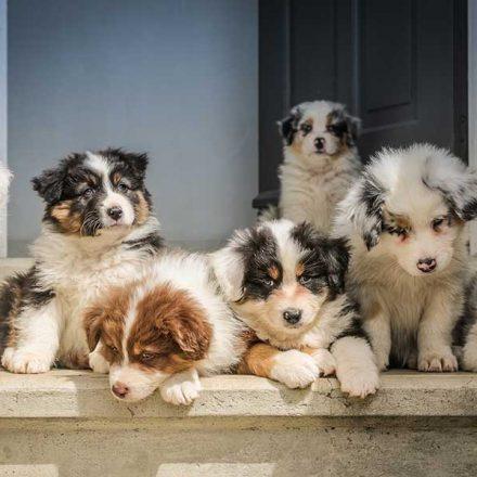 7 enseñanzas de amor y lealtad que aprendemos de los perros
