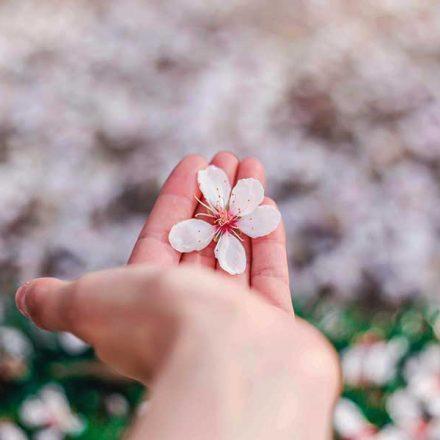 Vivir el presente: un enfoque importante para poder disfrutar la vida