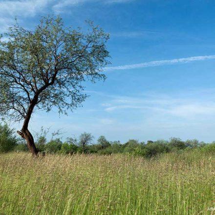 De Aguascalientes a Zacatecas: los mejores árboles para plantar en cada estado de México
