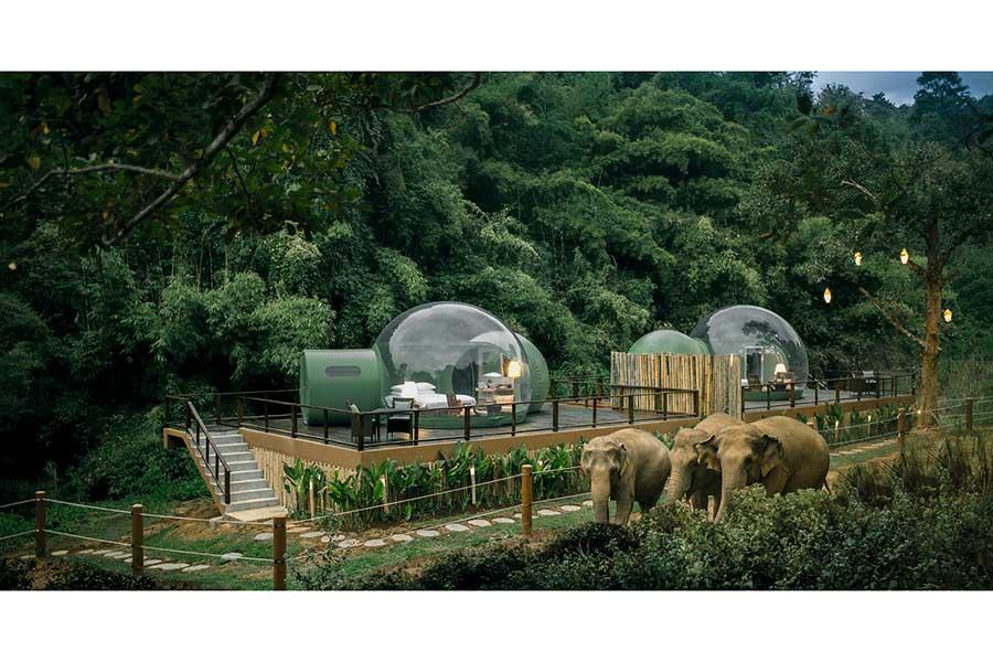 Este glamping en Tailandia te permite dormir dentro de burbujas en medio de un santuario de elefantes