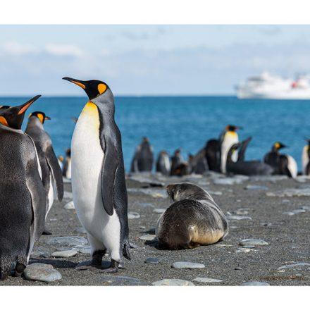 Imágenes satelitales revelan colonias de pingüinos en la Antártida nunca antes vistas