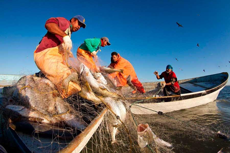 Pesca en Sonora