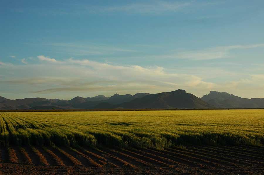 Campos en Sonora