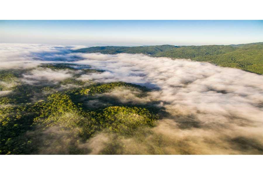 """Reserva de la Biosfera """"El Cielo"""", lugar donde las nubes cubren la biodiversidad tamaulipeca"""