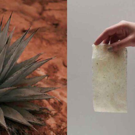 Joven mexicana crea bioplástico a partir del agave