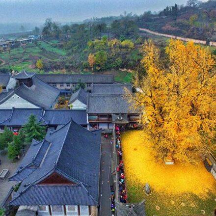 Conoce el árbol de 1,400 años plantado por un emperador chino y que continúa mostrando su belleza otoñal