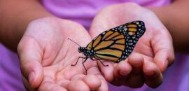¡Ya están aquí! Llegan las primeras mariposas Monarca a México