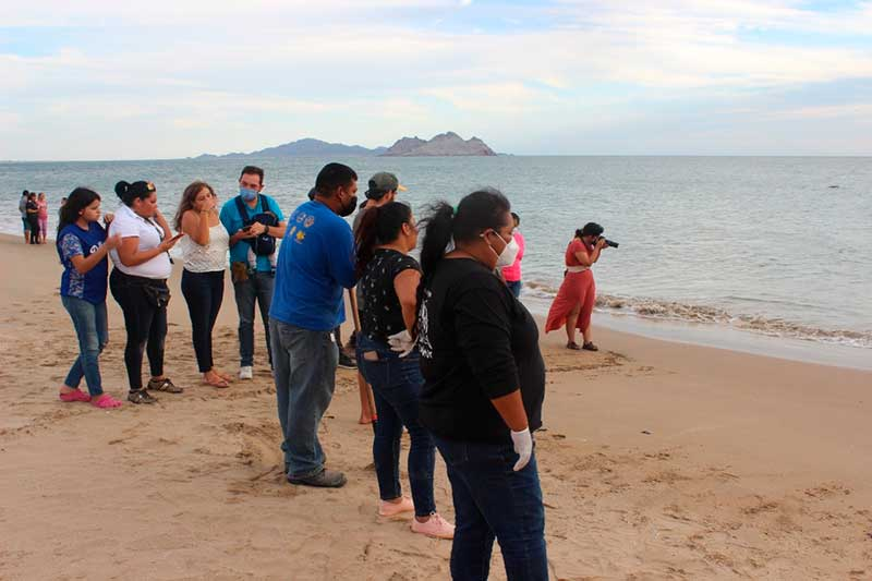 Grupo Tortuguero de Bahía de Kino