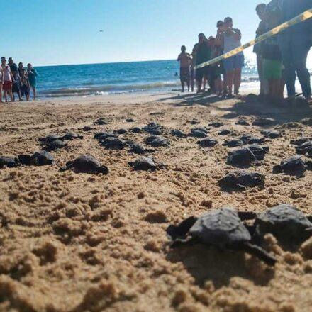 Grupo Tortuguero de Bahía de Kino ¡auténticos héroes de la naturaleza!