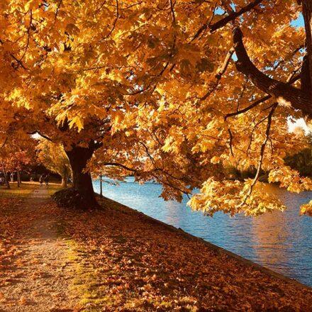 Crisis climática provocó que la caída de hojas en otoño se adelantara, afirma estudio