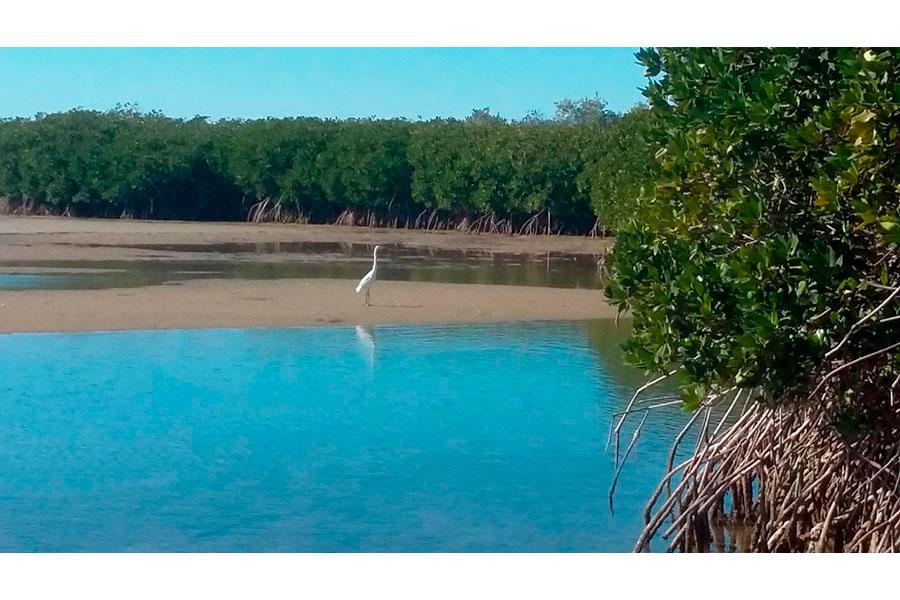 Turismo de aves (orniturismo) y su potencial en Bahía de Kino