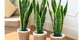 5 plantas de interiores que son extremadamente fáciles de cuidar