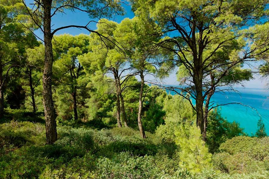 ¡Grecia reverdece! Plantarán 30 millones de árboles para 2030