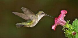 La leyenda maya de los colibríes