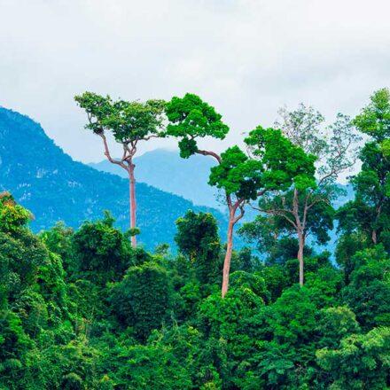 Biodiversidad: América Latina tiene el doble de especies de plantas que África y Asia