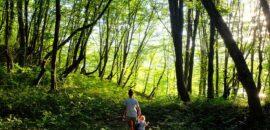 """""""Hacer las paces con la naturaleza"""", el nuevo plan de la ONU para lograr un mundo más sostenible"""