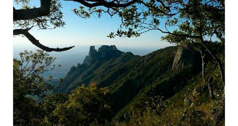 Sierra de Álamos – Río Cuchujaqui, joya de la biodiversidad sonorense