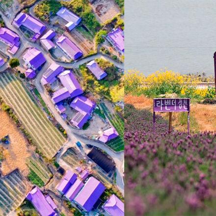 Banwol y Bakju, las islas de Corea del Sur donde todo es color púrpura