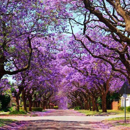 8 plantas y árboles del mundo que anuncian la llegada de la primavera