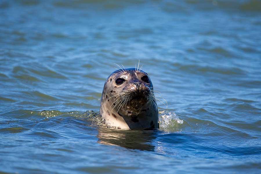 Océanos podrían absorber cada vez menos CO2, advierte la UNESCO