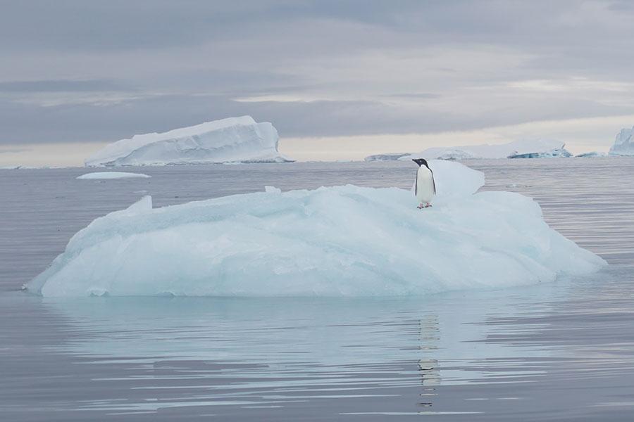 Calentamiento global pone en riesgo a un tercio de la Antártida aumentando el nivel del mar, revela estudio