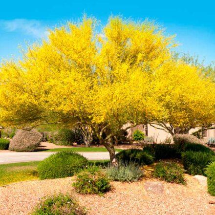 ¿Por qué elegir plantas nativas para tu hogar?
