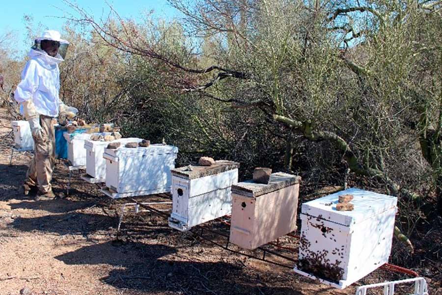 Dulce experiencia: montaje de un nuevo apiario en las inmediaciones de Punta Chueca