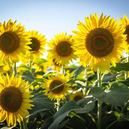 10 plantas con flores ideales para climas cálidos